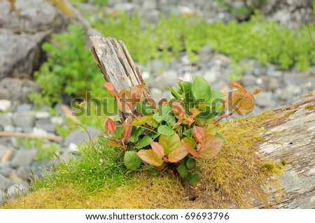 Young tree and mosses growing on an old stump - stock photo