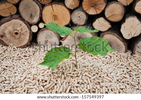 Young tree comes out of heap of pellets - stock photo