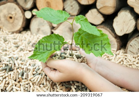 Young tree in female hands over a heap of pellets - stock photo
