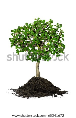 Young tree in plant - stock photo