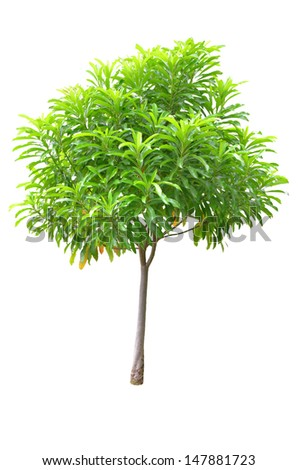 Young Tree Isolated on white background with clipping path - stock photo