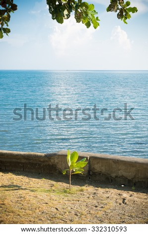young tree on a tropical beach in the philippines - stock photo