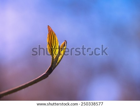 Young tree sprout in early spring - stock photo
