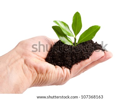 young tree to plant by man, Ecology and the Environment - stock photo