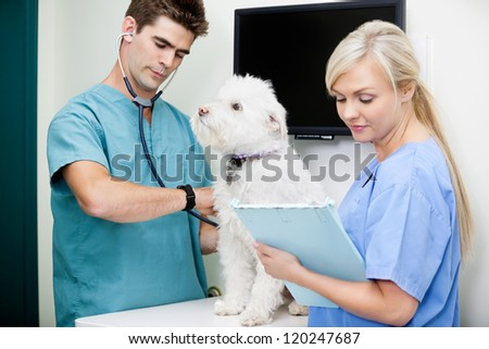 Young vet with tech measuring the heart rate of a dog - stock photo