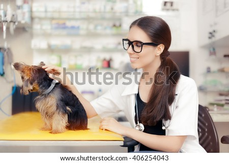 Young Veterinarian Female Doctor with Cute Dog - Confident beautiful veterinary physician consulting cute pet animal  - stock photo