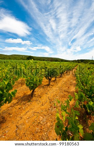 Young Vineyard in Southern France - stock photo