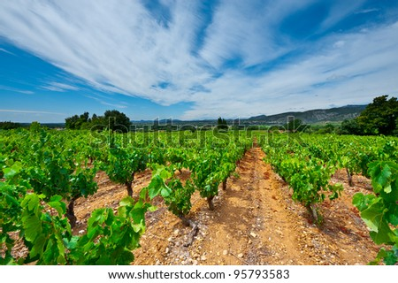 Young Vineyard in Southern France, Region Rhone-Alpes - stock photo