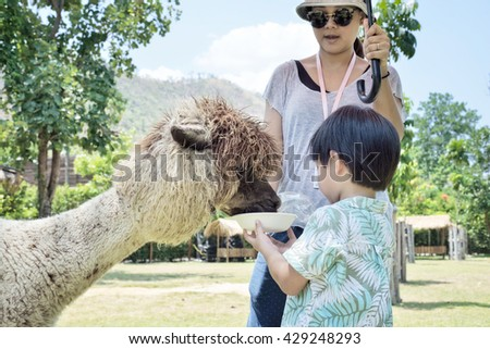 Young woman and her little son feeding alpaca in farm - stock photo