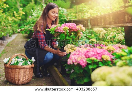 Young woman at a nursery holding a potted pink hydrangea plant in her hands as she kneels in the walkway between plants with a basket of fresh white flowers for sale - stock photo