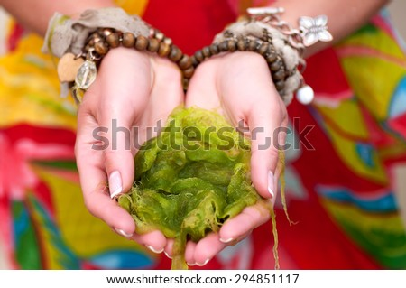young woman hands holding seaweed on the beach. natural summer background - stock photo