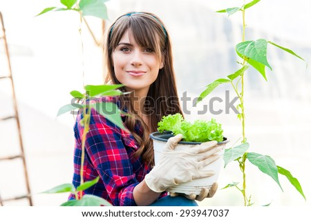 Young woman holding salad seedlings in greenhouse. - stock photo