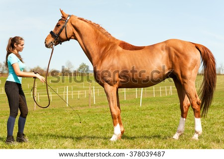 Young woman riding trainer holding purebred chestnut horse. Exterior image with side view. Multicolored summertime outdoors horizontal image. - stock photo