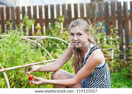 young woman ripe tomatoes collected from greenhouse - stock photo