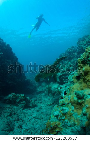 young woman swimming with a green sea turtle in the deep blue pacific ocean - stock photo