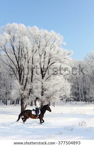 Young woman walking horseback in snow woods - stock photo