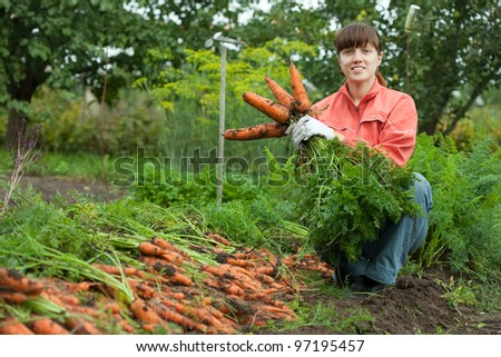 young woman with carrot harvest in field - stock photo