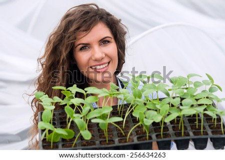 Young woman working in a greenhouse holding a crate with seedlings in a greenhouse - stock photo