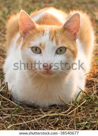 Young yellow male cat - stock photo