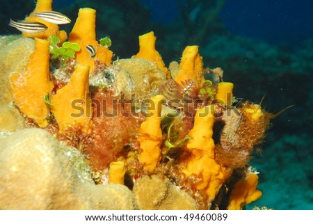 young yellow sponges - stock photo