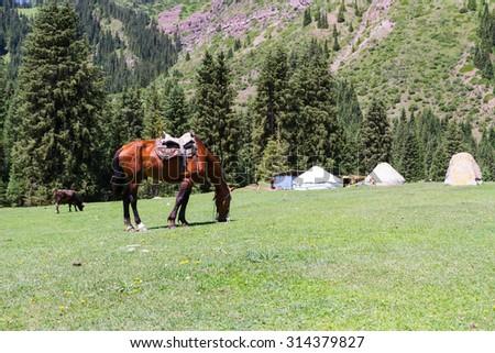 Yurt in Alatau Plateau, Tian Shan mountains near Karakol in Kyrgyzstan, Central Asia - stock photo