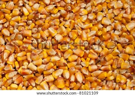 zea mais corn kernels texture - stock photo