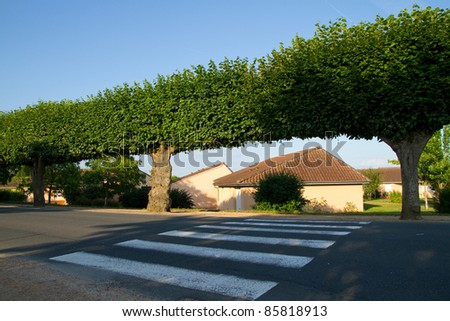 zebra crossing and  trees  in France - stock photo