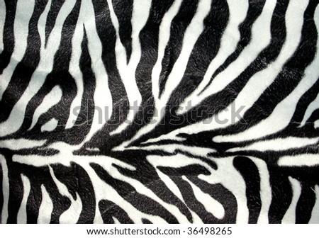 Zebra pattern for background - stock photo