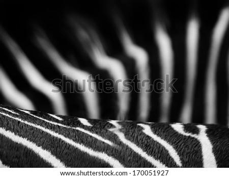 Zebra stripes in black and white for use as a background - stock photo