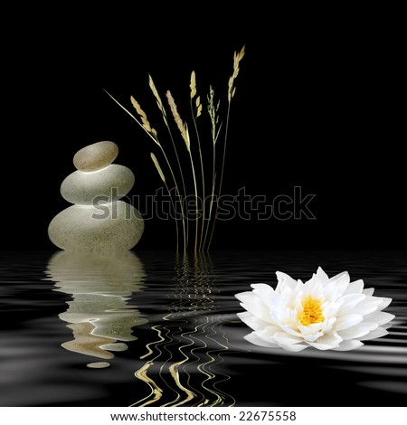 Zen abstract of grey spa stones, a white lotus lily and wild grasses with reflection over rippled water, against black background. - stock photo