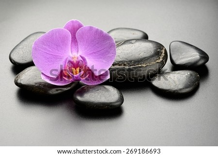 zen basalt stones and orchid.  - stock photo