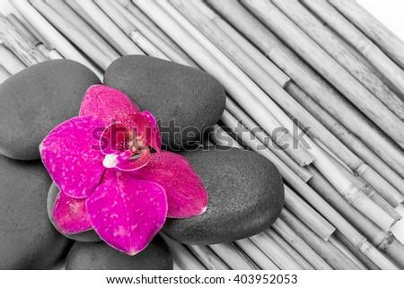 zen basalt stones ,orchid and bamboo - stock photo