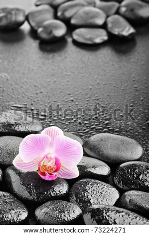 zen black stones and pink orchid in the water - stock photo