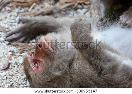 Zen monkey. - stock photo