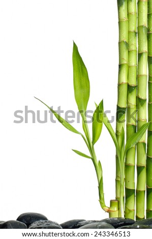 zen stones and bamboo grove leaves on black stones - stock photo