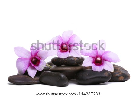 zen stones and orchid - stock photo