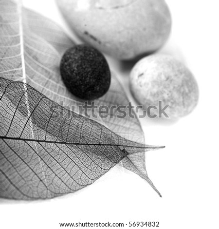 zen stones and skeleton leaves over white (black and white image) - stock photo
