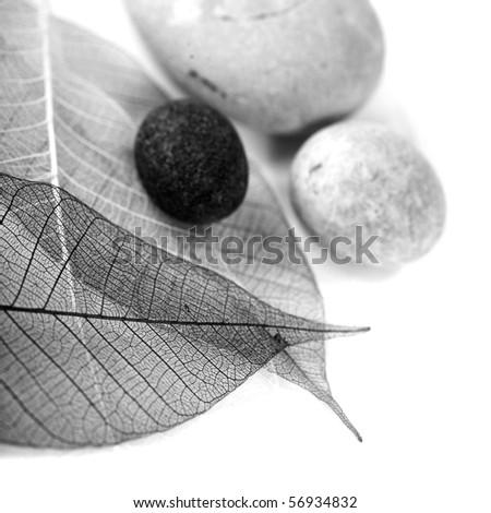 zen stones and skeleton leaves over white (black and white image) - stock photo