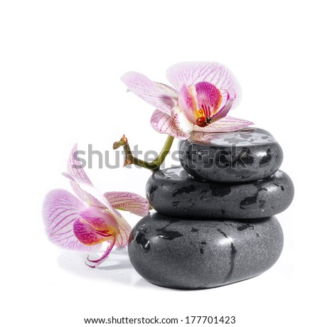 Zen stones with orchid and ladybird. Isolated on white background. - stock photo
