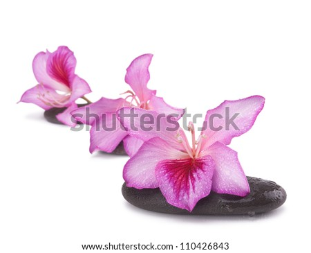 zen stones with pink flowers isolated on white background.Shallow DOF - stock photo