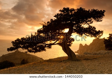Zen tree - stock photo