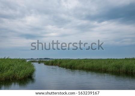 Zhalong Nature Reserve, Qiqihar Crane Marsh - stock photo