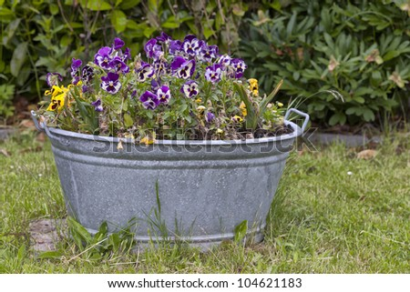 zinc tub planted with flowers in a cottage garden. - stock photo