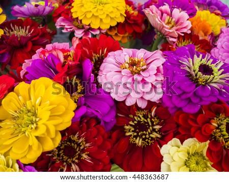 Zinnia bouquet at local farm market. - stock photo