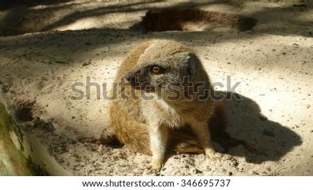Zoo animal close up - stock photo