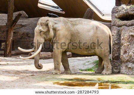 ZURICH, SWITZERLAND - JUNE 13: The new elephant compound in Zurich Zoo on June 13, 2015. The Zurich Zoo supports Kaeng Krachan National Park in Thailand as it protects the animals living there. - stock photo