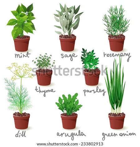 8 different herbs in pots - stock vector