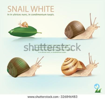 Garden Snail in front of white background.vector - stock vector