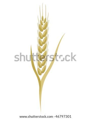 grain ear vector - stock vector