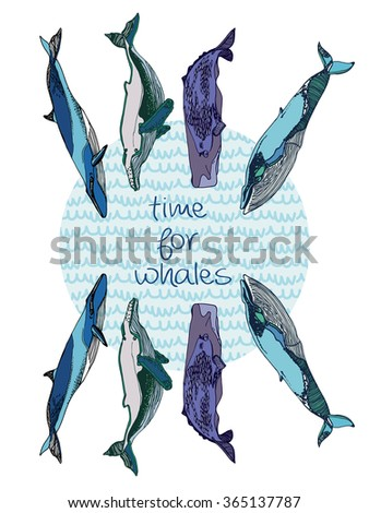 """Hand drawn illustration. with isolated set of  whales on white background. Blue, sperm, humpback whales with lettering  """" time for whales"""". Save the world. - stock vector"""